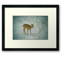 Deer Winter Framed Print