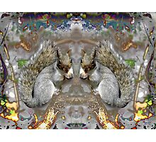 Two bushy Tails Photographic Print