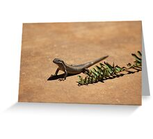 Interacting with wildlife - African Striped Skink Greeting Card