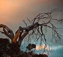 The Tree by Su Walker