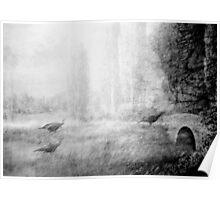 wild turkeys, green county, ky Poster