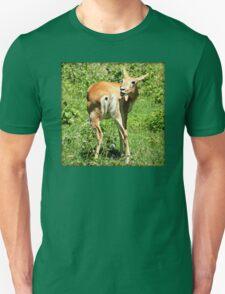 Funny Pose Of An African Steenbok Antelope T-Shirt