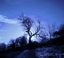 roslin glen tree and sun blue by TheLostArt