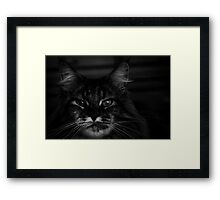 Ms. Imperious Framed Print