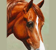 Chestnut Morgan Horse by csforest