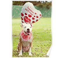 Love Me Furever Poster