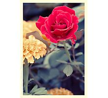 Flowers Yesteryear Photographic Print