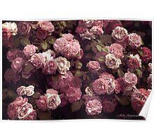 ....vintage roses............. Poster