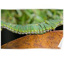 Caterpillar Stampede 2 Poster