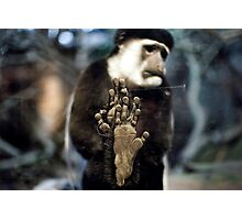 Colobus Monkey, behind glass Photographic Print