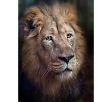 Portrait of the King! Photographic Print
