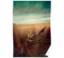 Christmas tree on an empty beach Poster
