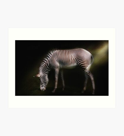 Grevys Zebra  Art Print