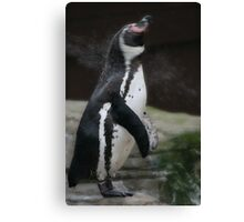 Wet Penguin Canvas Print