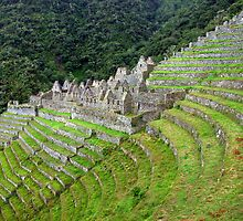Winay Wayna by Dan Bronish