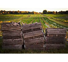 Crates in the Field Photographic Print