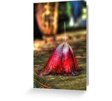 Fallen Hybiscus Greeting Card