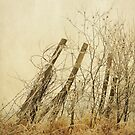 Winter Fence by KBritt