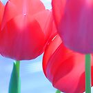 Tulips Look Straight Up by Raychel Castelletti