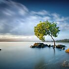 Zen Light by Ben Ryan
