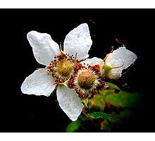 ThimbleBerry Blossom Photographic Print