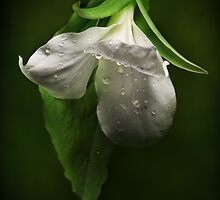 The White Trillium by EbyArts