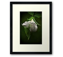 The White Trillium Framed Print