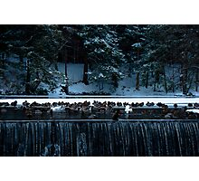 Duck Pond in Winter Photographic Print
