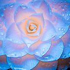 Camellia Illuminata by LadyEloise