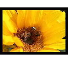 Bread feeds the body, indeed, but flowers feed also the soul. Photographic Print