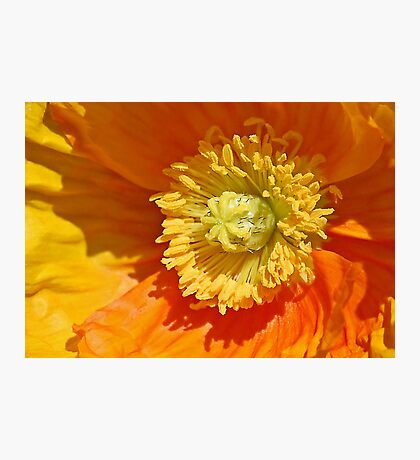Heart Of A Poppy Photographic Print