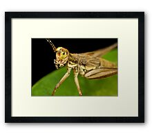 Face only a mother could love Framed Print