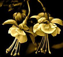 Fuchsia 5 by Alison Hill