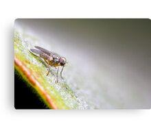 Fly super model Canvas Print