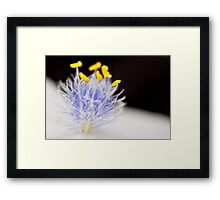Saturated reproduction Framed Print