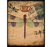 Dragonfly 3 Photographic Print