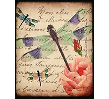Dragonfly 4 Photographic Print