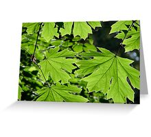 Green Canopy Greeting Card