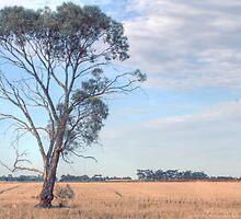 farmlands by DaniBrown