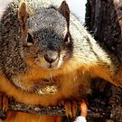 Squirrel by Betsy  Seeton