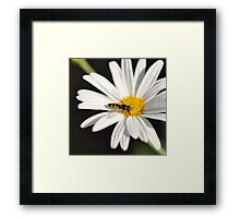 The Power of Simplicity ~ Framed Print
