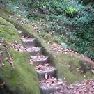 steps in the forest by MardiGCalero