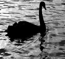 Swan Silhouette by Trudi Skinn