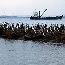 Cormorants at rest by Alastair Creswell