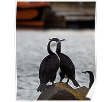 Cormorants waiting for the boat Poster