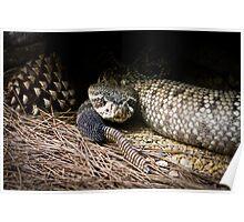 Rattle snake Poster