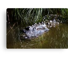 Alligator in the water Canvas Print