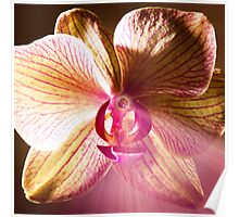Glowing Orchid of Light Poster