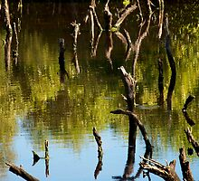 Dance of the Mangroves by Renee Hubbard Fine Art Photography