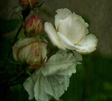A Rose by any other Name by Catherine Hamilton-Veal  ©